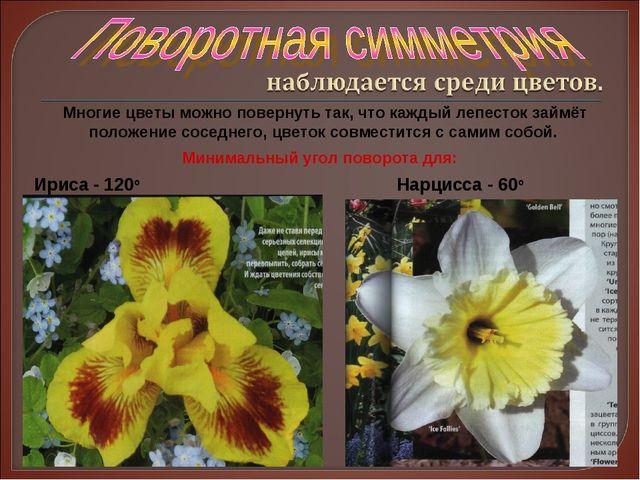 Многие цветы можно повернуть так, что каждый лепесток займёт положение соседн...