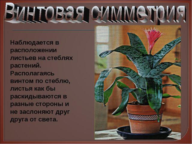 Наблюдается в расположении листьев на стеблях растений. Располагаясь винтом п...