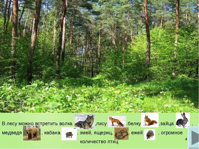 * В лесу можно встретить волка ,лису ,белку ,зайца , медведя , кабана , змей,...