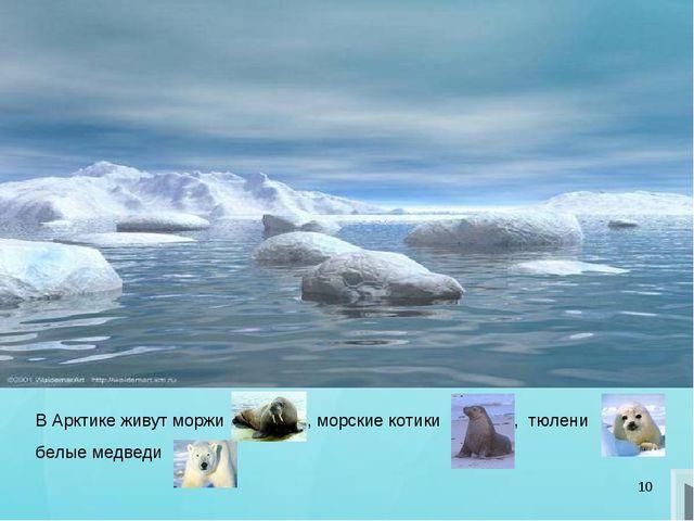 * В Арктике живут моржи , морские котики , тюлени белые медведи
