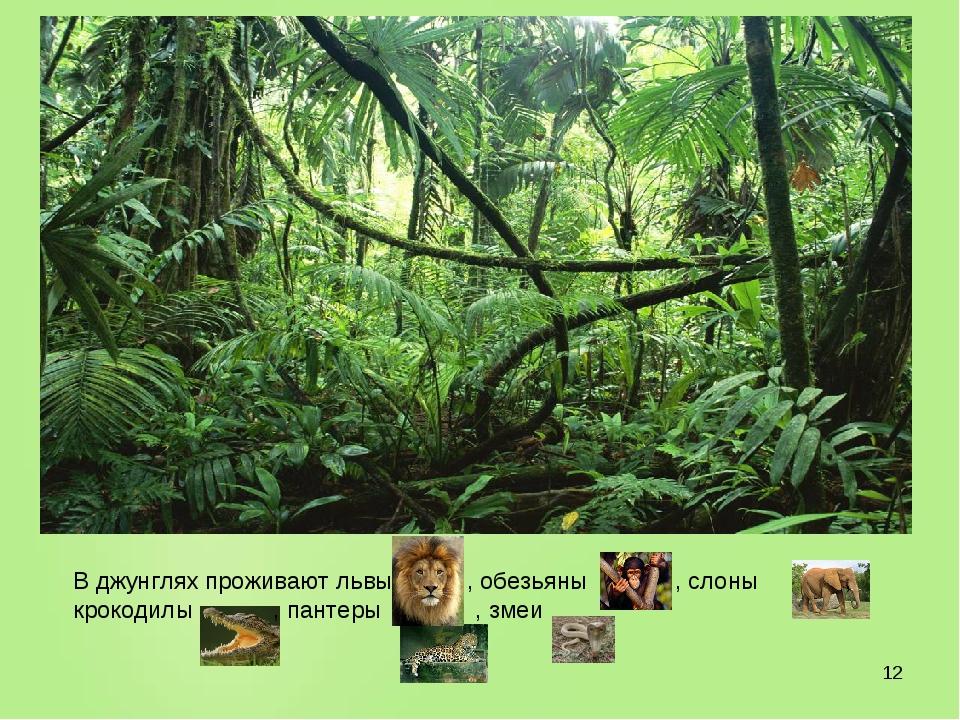 * В джунглях проживают львы , обезьяны , слоны , крокодилы , пантеры , змеи