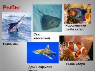Рыбы Рыба клоун Скат хвостокол Длиннокрылая акула Рыба меч Королевская рыба а