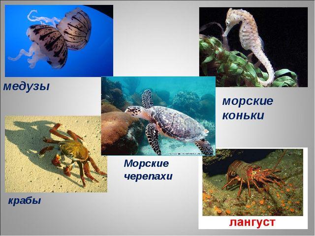 медузы морские коньки Морские черепахи крабы