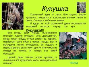 Кукушка Все птицы вьют гнезда, высиживают птенцов. Кроме кукушки. Она дожидае