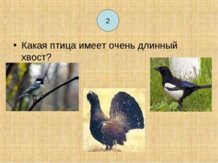 2 Какая птица имеет очень длинный хвост? 2
