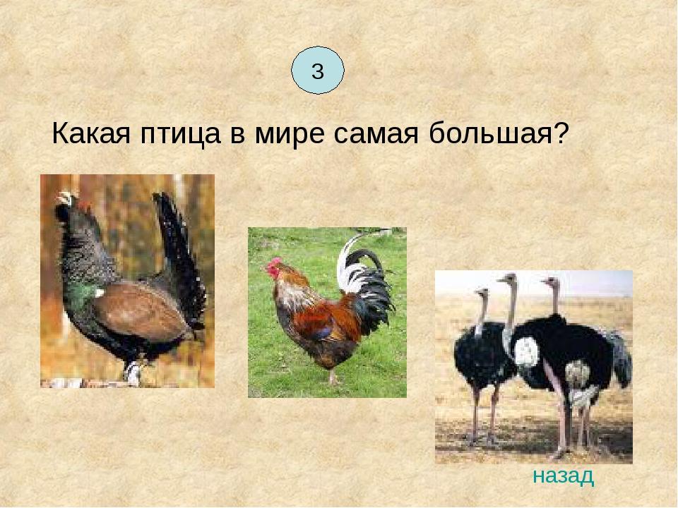 Какая птица в мире самая большая? 3 назад