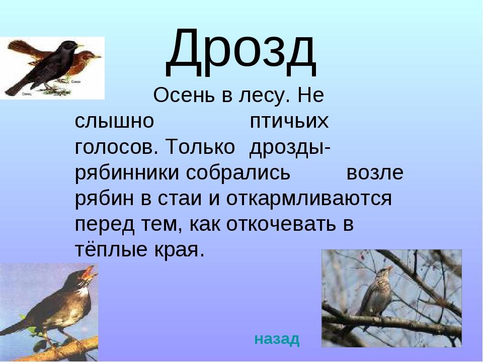 Дрозд Осень в лесу. Не слышно птичьих голосов. Только дрозды- рябинники...