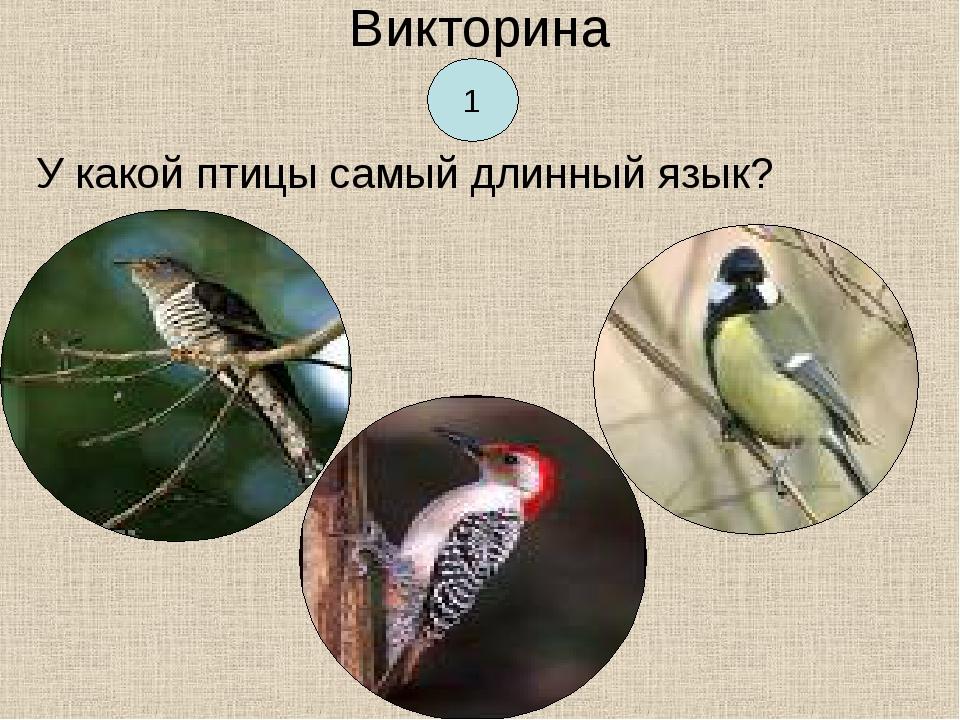 Викторина У какой птицы самый длинный язык? 1