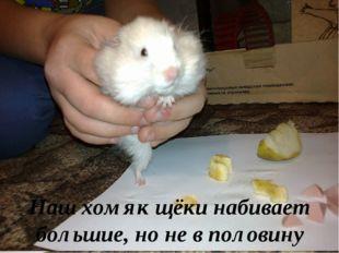 Мите предложили варианты еды. Первое, что он выбрал – колбасу; второе – орех