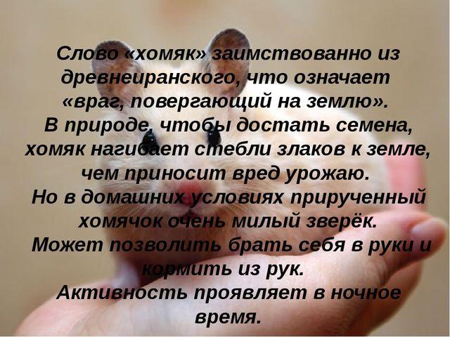Слово «хомяк» заимствованно из древнеиранского, что означает «враг, повергаю...