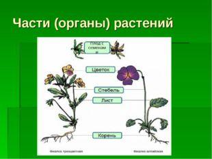 Части (органы) растений