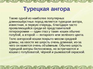 Турецкая ангора Также одной из наиболее популярных длинношёрстных пород явля