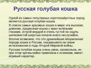 Русская голубая кошка Одной из самых популярных короткошёрстных пород являет