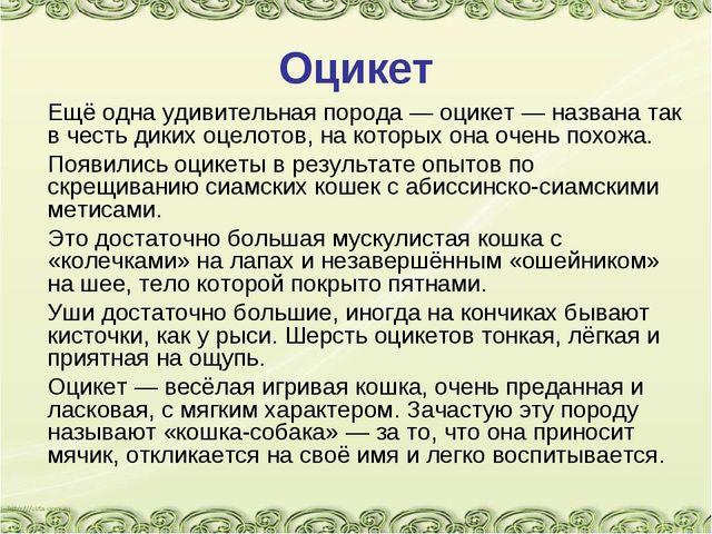 Оцикет Ещё одна удивительная порода — оцикет — названа так в честь диких оце...