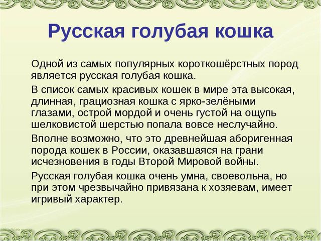 Русская голубая кошка Одной из самых популярных короткошёрстных пород являет...