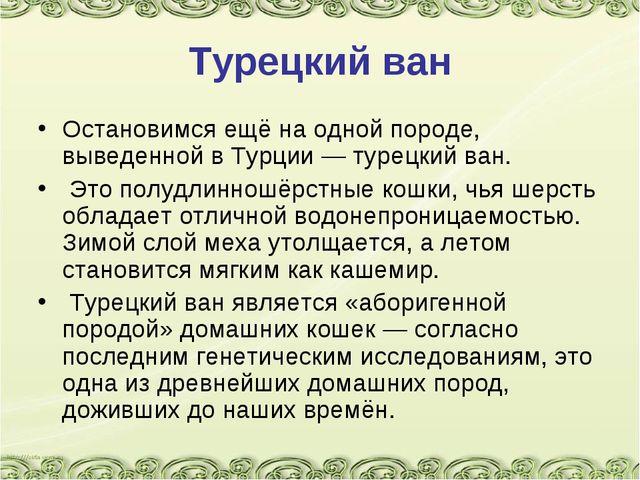 Турецкий ван Остановимся ещё на одной породе, выведенной в Турции — турецкий...