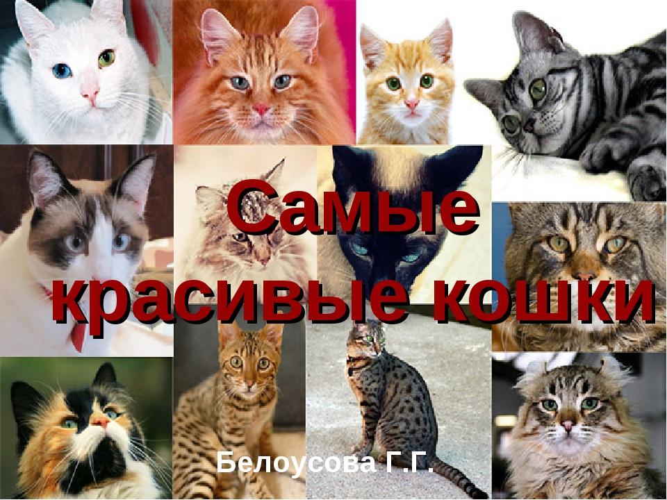 Самые красивые кошки Белоусова Г.Г.