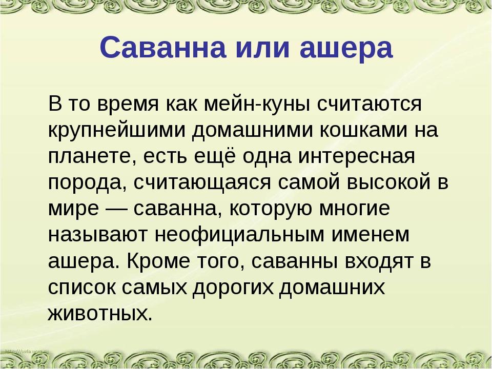 Саванна или ашера В то время как мейн-куны считаются крупнейшими домашними к...