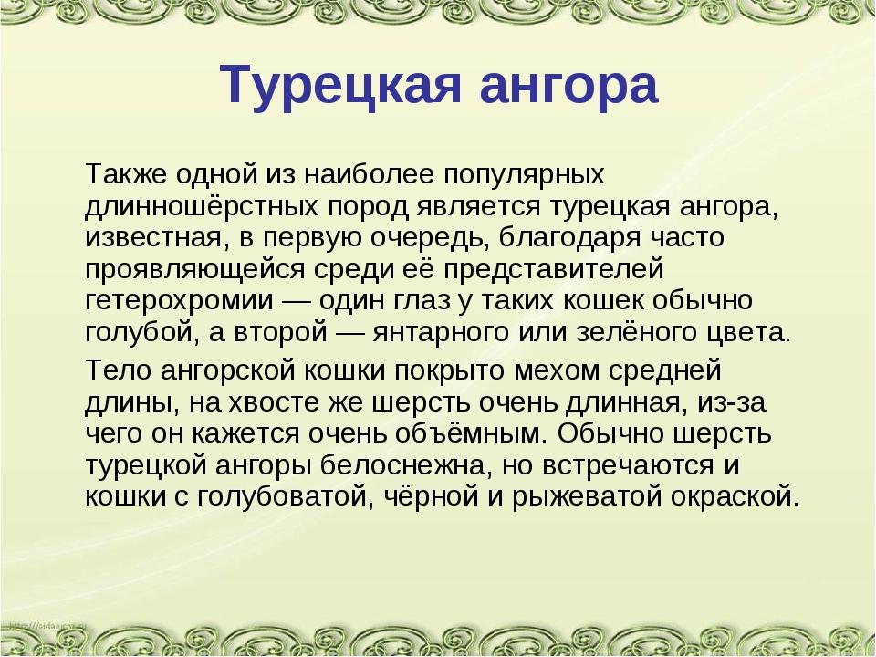 Турецкая ангора Также одной из наиболее популярных длинношёрстных пород явля...