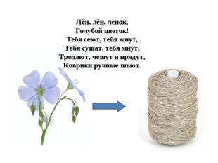 Лён, лён, ленок, Голубой цветок! Тебя сеют, тебя жнут, Тебя сушат, тебя мнут,