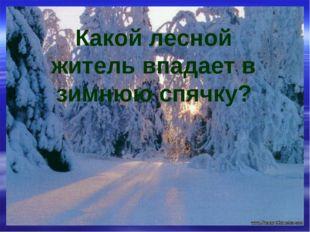 Какой лесной житель впадает в зимнюю спячку?