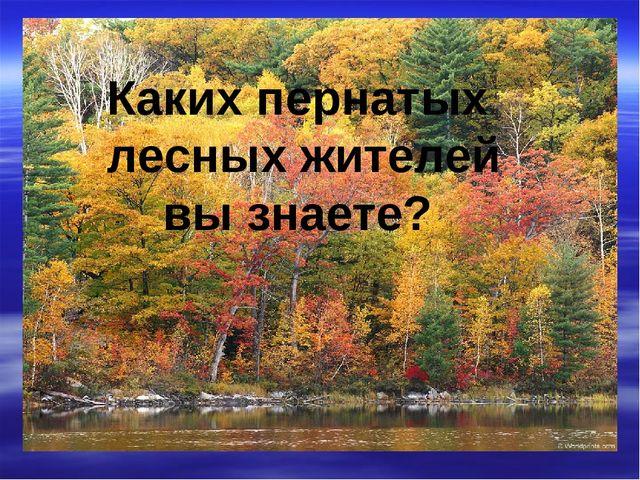Каких пернатых лесных жителей вы знаете?