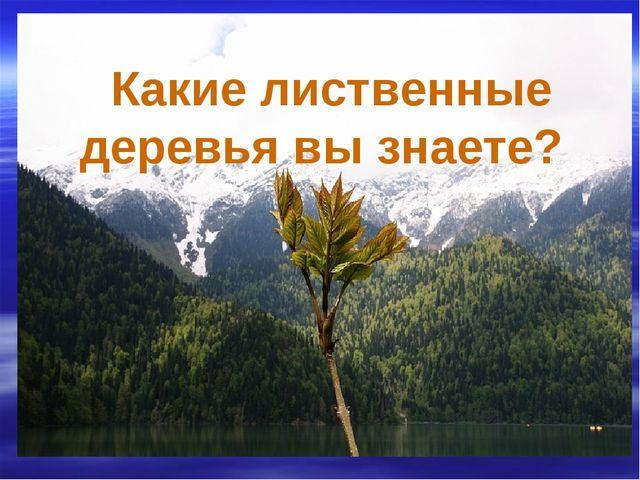 Какие лиственные деревья вы знаете?