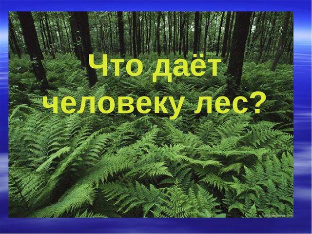 Что даёт человеку лес?