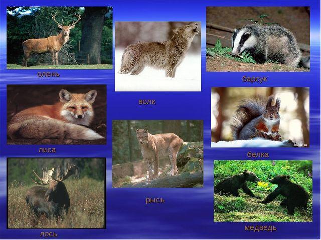олень лиса лось волк барсук белка медведь рысь