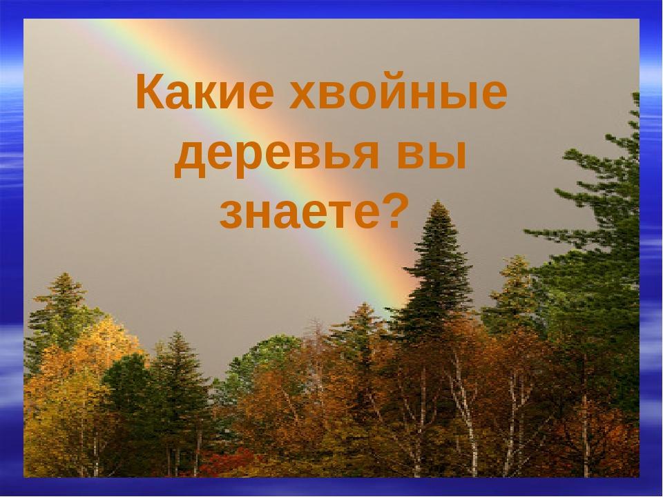 Какие хвойные деревья вы знаете?
