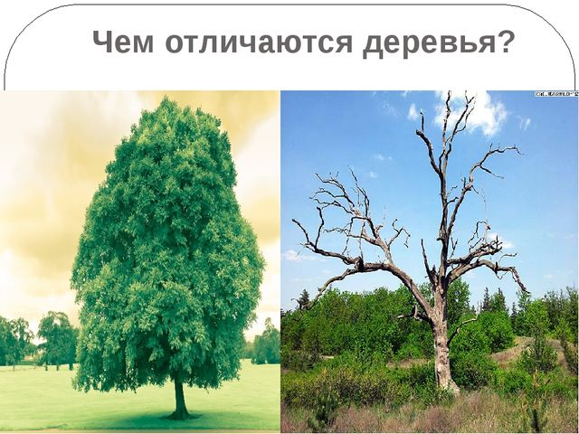 Чем отличаются деревья?
