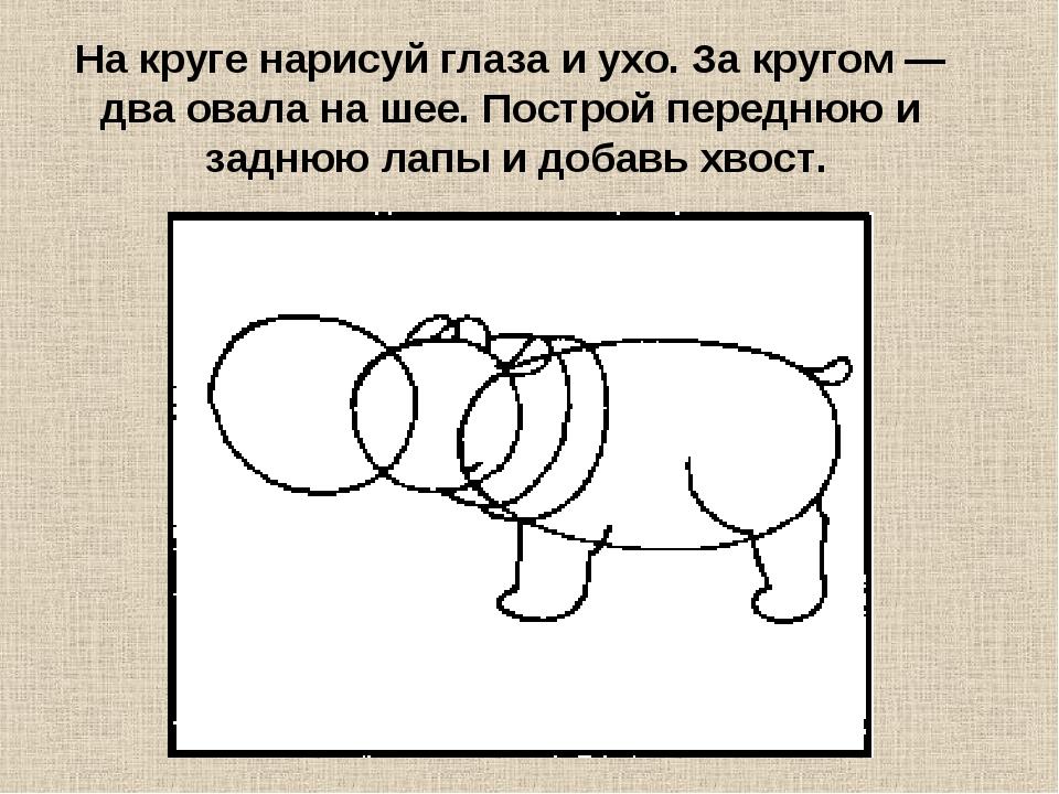На круге нарисуй глаза и ухо. За кругом — два овала на шее. Построй переднюю...