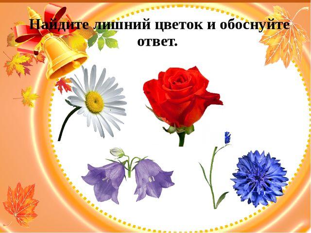 Найдите лишний цветок и обоснуйте ответ.