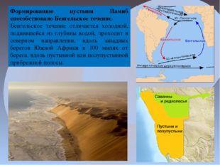 Формированию пустыни Намиб способствовалоБенгельское течение. Бенгельское те