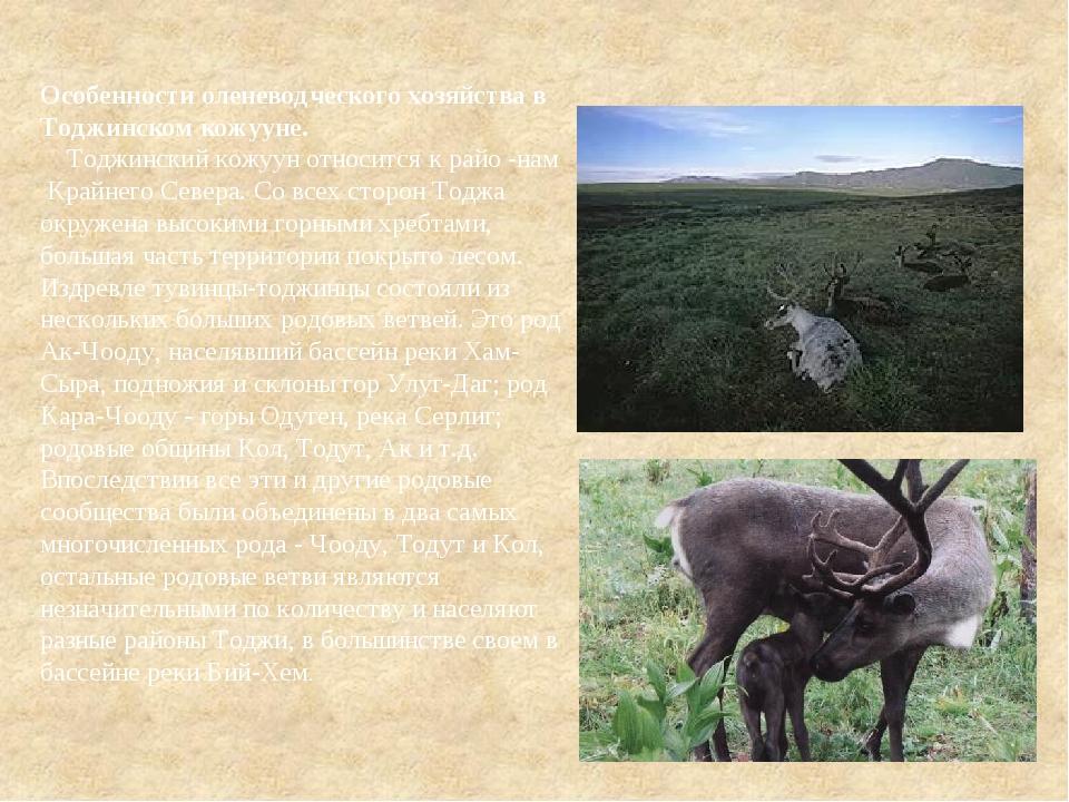 Особенности оленеводческого хозяйства в Тоджинском кожууне. Тоджинский кожуун...