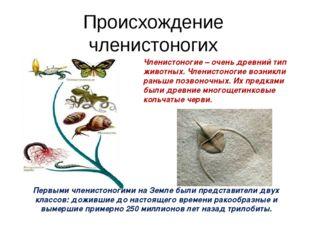 Происхождение членистоногих Членистоногие – очень древний тип животных. Члени