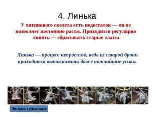 4. Линька У хитинового скелета есть недостаток — он не позволяет постоянно ра