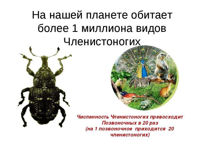 На нашей планете обитает более 1 миллиона видов Членистоногих Численность Чле...