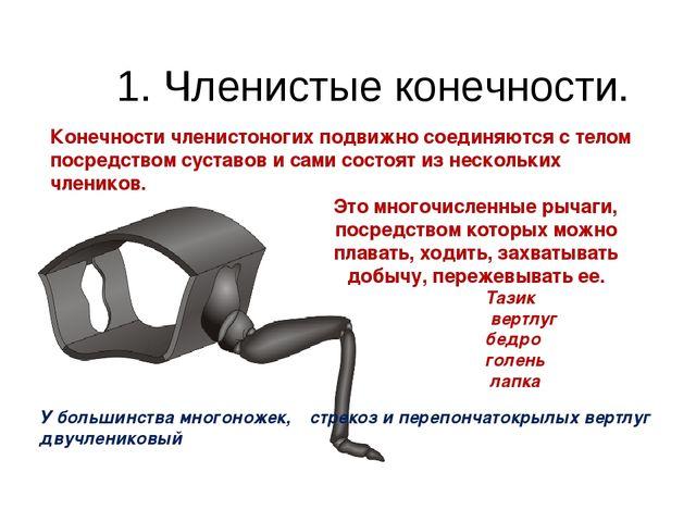 1. Членистые конечности. Конечности членистоногих подвижно соединяются с тел...