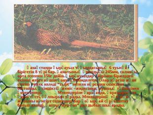 Қазақстанда қырғауыл тұқымдасының 6 туысқа бірігетін 8 түрі бар. Қанатының