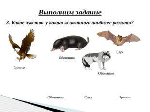 Выполним задание 3. Какое чувство у какого животного наиболее развито? Слух З