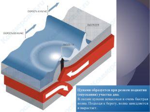 Цунами образуется при резком поднятии (опускании) участка дна. В океане цунам