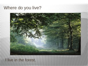 Where do you live? I live in the forest.
