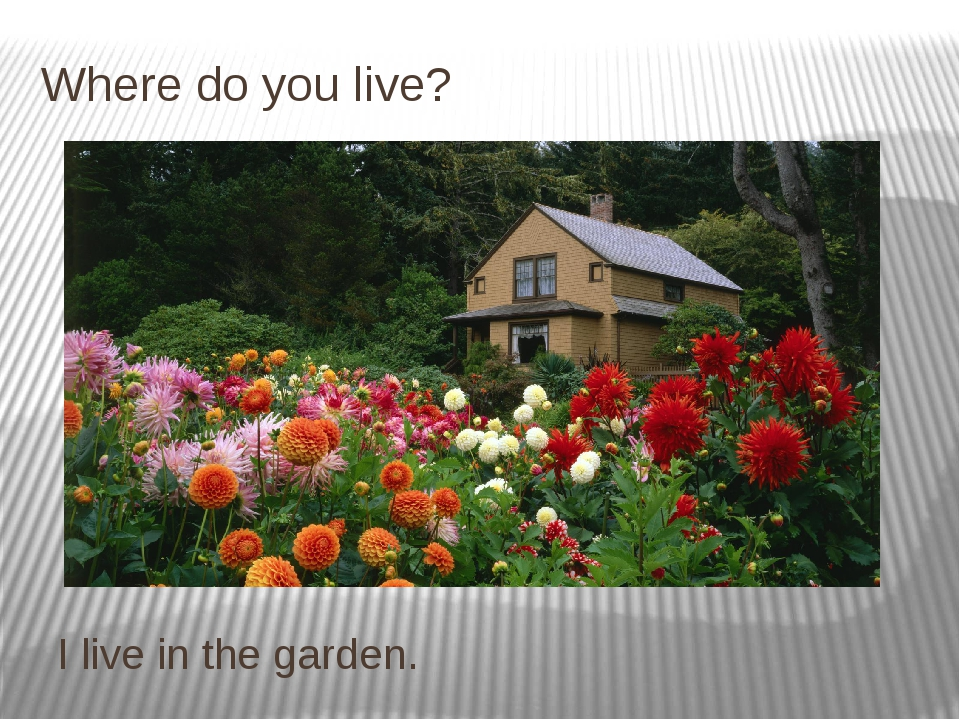Where do you live? I live in the garden.