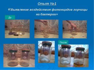 Опыт №1 «Выявление воздействия фитонцидов горчицы на бактерии» До После