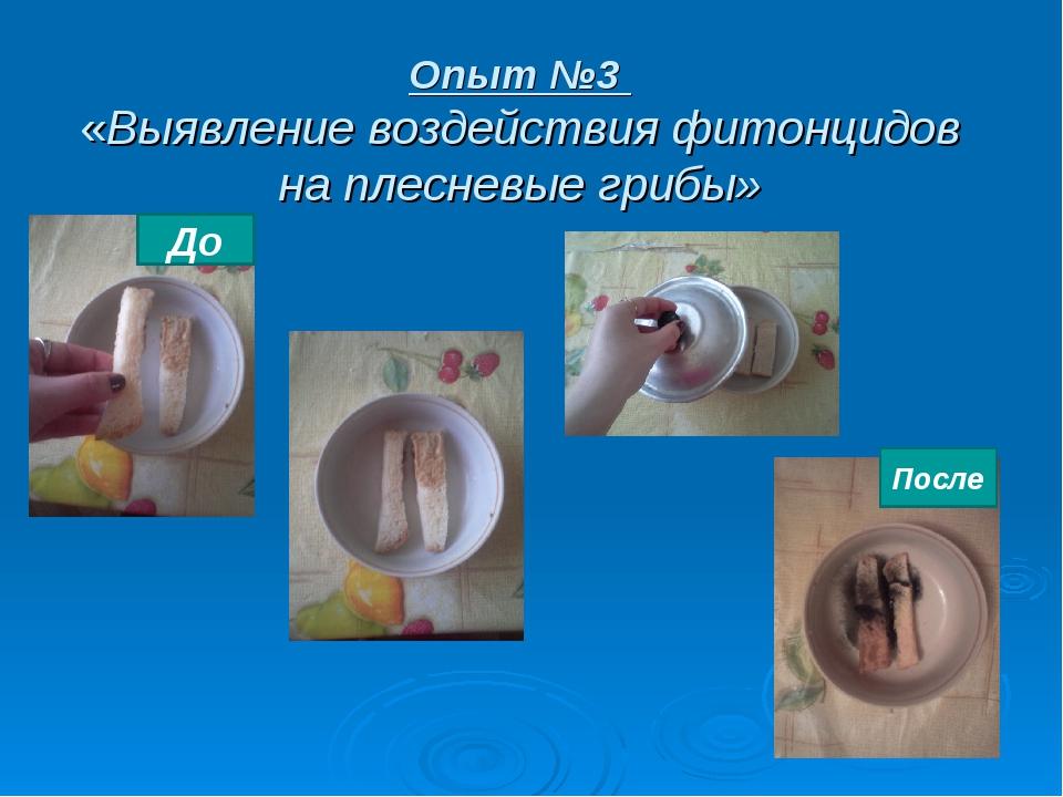 Опыт №3 «Выявление воздействия фитонцидов на плесневые грибы» До После