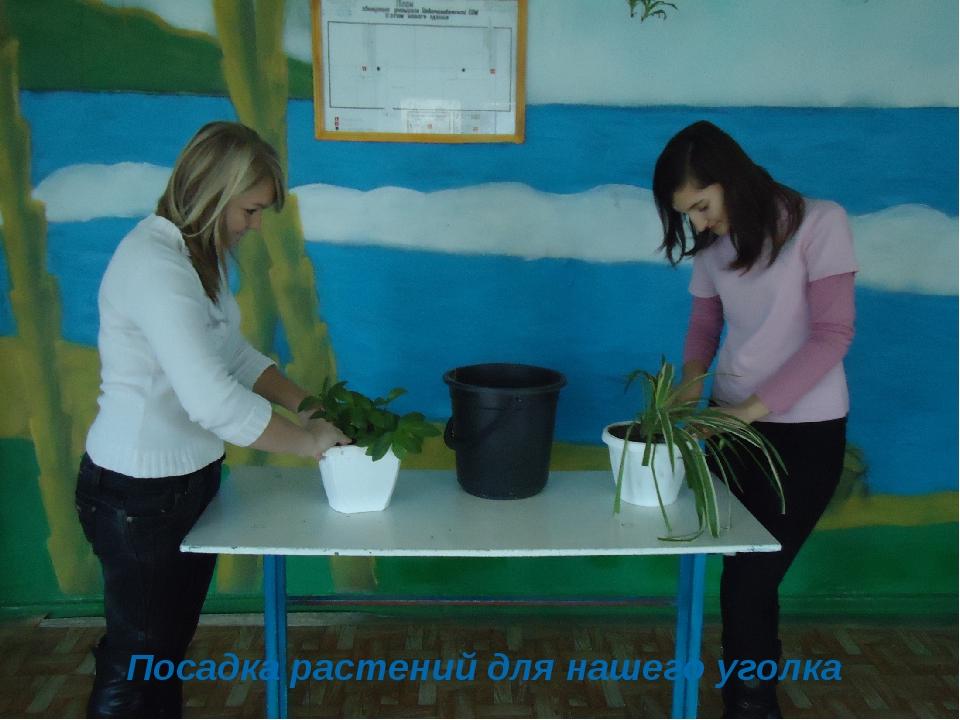 Посадка растений для нашего уголка