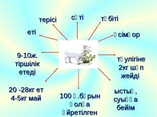 терісі еті сүті 9-10ж. тіршілік етеді 20 -28кг ет 4-5кг май ыстық, суыққа бей