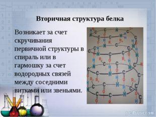 Вторичная структура белка Возникает за счет скручивания первичной структуры в