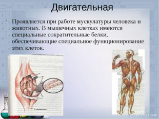 Двигательная Проявляется при работе мускулатуры человека и животных. В мышечн